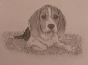 buffy-beagle
