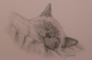 tonkenese-kitten