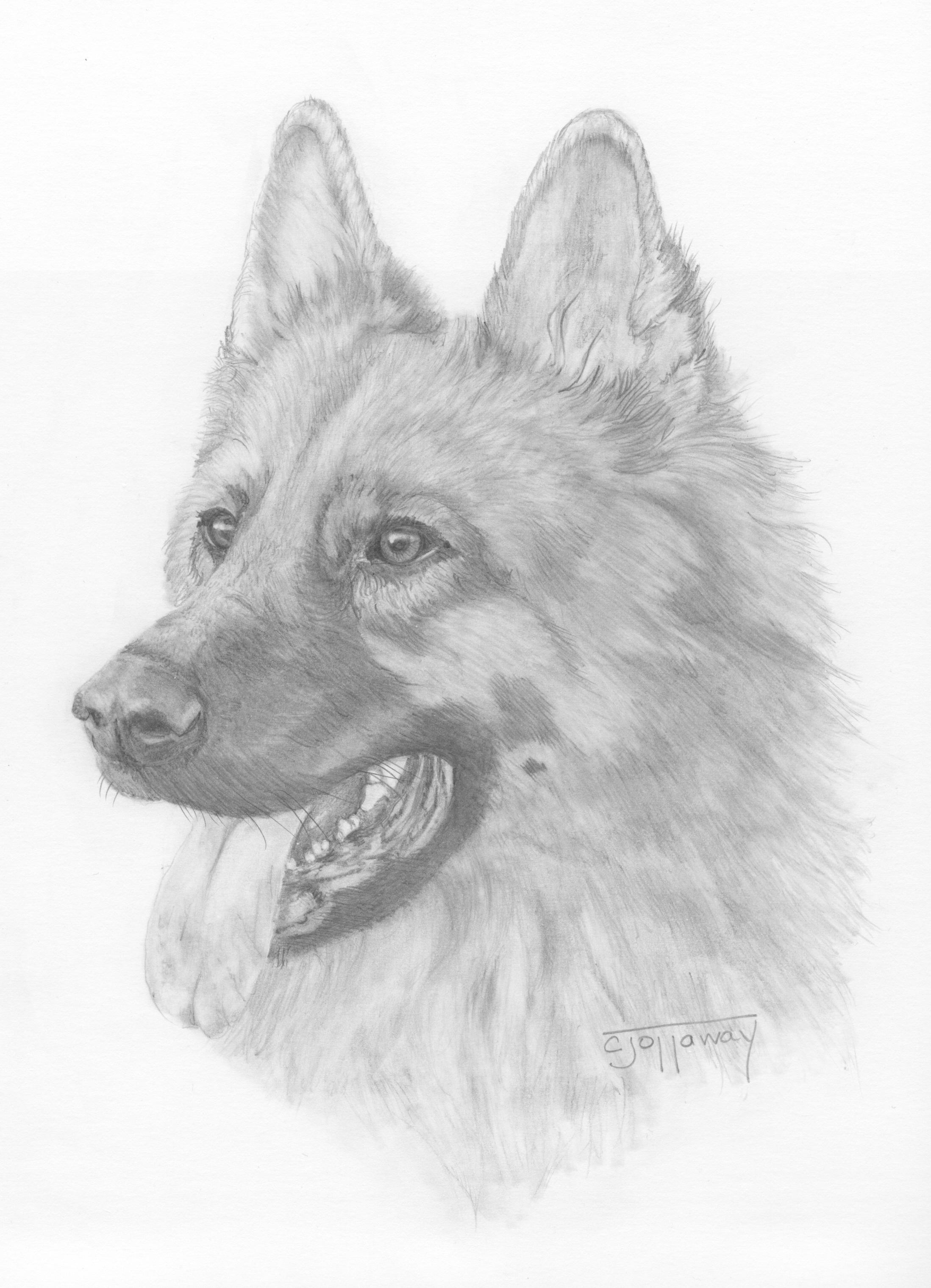 German Shepherd Cjottaway