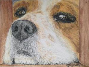 colored pencil dog
